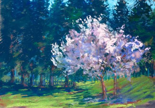 Cuesta Park Blossoms
